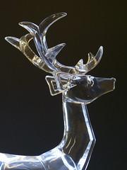 Oh Deer P1450062mods (Andrew Wright2009) Tags: braintree camera club practical oh deer glass