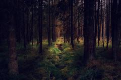Zauberwald (Gruenewiese86) Tags: harz landschaft wald wã¤lder natur wälder landcsape forest forestscape waldlandschaft wandern dream zauberwald bergwald germany