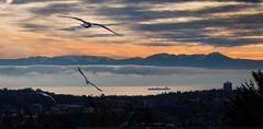 the strait (confounded21) Tags: canada victoria olympics pacific juandefuca ocean seagulls gulls freighter bc