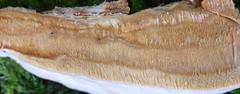 Kollane püsipoorik; Perenniporia subacida; korkkikerroskääpä (urmas ojango) Tags: seened fungi polyporales torikulaadsed polyporaceae torikulised perenniporia püsipoorik korkkikerroskääpä perenniporiasubacida kollanepüsipoorik