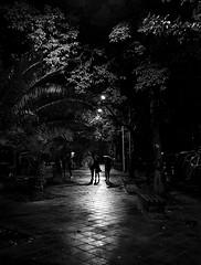Avenue   Chapter III (M Faran Hassan) Tags: fineart pakistan blackandwhite visuals bnw bnwpictures bnwpics