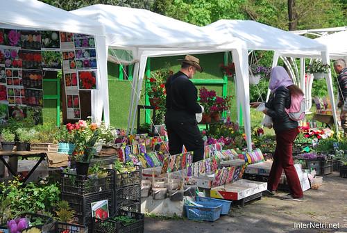 Київ, Співоче поле, тюльпани Травень 2019 InterNetri Ukraine 014