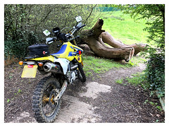 Let Sleeping Elephants Lie! (The Stig 2009) Tags: thestig2009 thestig stig 2009 2019 tony o tonyo apple iphone 8 plus suzuki drz400sm off road dirtbike tree log dead wood countryside park
