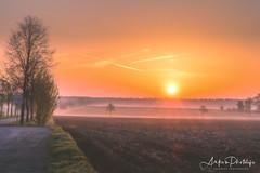 wonderful nature (ankes_photolife) Tags: dusk fog dawn sunrise twilight sunbeam sky moody horizon sunlight light morning outdoors tree landscape landschaft sunshine sonnenaufgang photography sun