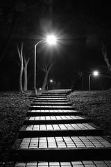 Daan Forest Park (theq629) Tags: taiwan taipei daan daanforestpark path lamp