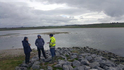 Tramore Backstrand compensatory wetland, April 2019