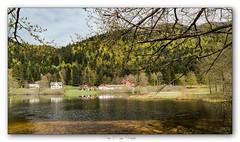 Pb_5030041 (calpha19) Tags: imagesvoyagesphotography adobephotoshoplightroom olympusomdem1mkii zuiko ed1260swd lac retournemer lake xonruptlongemer vosges grandest printemps 2019 ngc flickrsexplore vert eaux calmes paysages landscapes filtrenisi cplnisi