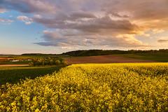 yellow field (KieGe) Tags: engerwitzdorf landschaft mühlviertel austria upperaustria oberösterreich 5dm3