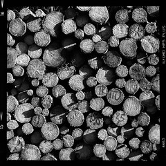 TRITU 15,6 2,5 (vincent-photo) Tags: analog blackwhite bw caffenol caffenolch film hp5 ilford mediumformat morvan square tlr twinlensreflex vintage 120 yashica12 yashica yashicaffenol 6x6