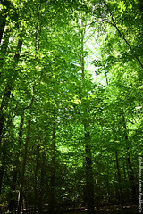 Tree Canopy (Snapping Beauty) Tags: spring natural foliage alexandriava nature nationalpark abstract washingtondc rural background things clean tree leaves seasons peace scenery beautyinnature woods forest photography virginia naturewildlife green stills tranquility places colors