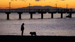 companionship (Richard Meares) Tags: dawn auckland murrays bay silhouette rangitoto fishing beach sea pacific pier jetty wharf fishermen dog pet master
