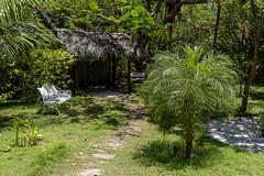 A7303782_s (AndiP66) Tags: bandos nordmaléatoll northmaleatoll kaafu atoll insel island malediven maldives indischerozean indianocean märz march 2019 sony sonyalpha 7markiii 7iii 7m3 a7iii alpha ilce7m3 sonyfe24105mmf4goss sony24105mm 24105mm emount sel24105g andreaspeters