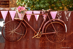 Flower deliveries will be late today...... (Johann (Still Me!)) Tags: bicycle rust rusty rustybicycle abandoned derelict flickrlounge saturdaytheme flickrloungesaturdaythemeweek18~rust makemesmile johanndejager canoneos7dmarkii canonef50mmf14usm hss