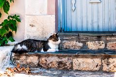 Old Village, Alonnisos (Kevin R Thornton) Tags: d90 alonnisos nikon animal alonissos street travel northernsporades cat greece oldtown oldvillage sporades alonnissos decentralizedadministrationof