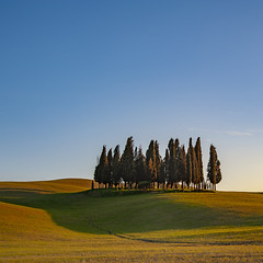 gang of trees (Blende1.8) Tags: toskana tuscany tree trees tuscan landscape landschaft hügel huegel hill hills italy italia italien toscana italian bluesky color colours colourful cypress cypresses zypressen toskanisch light shadows