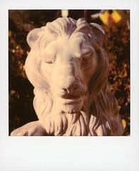 Beachwood Lion (tobysx70) Tags: polaroid originals color 600 instant film slr680 beachwood lion drive canyon hollywood hills los angeles la california ca big cat kingofthejungle face mane statue sculpture bokeh toby hancock photography