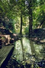 gole del Menotre (stefano.paglialunga1) Tags: valledelmenotre riflesso nikond7000 nikon natura umbria summer outdoors