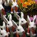 Rabbit Crowd