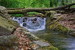 Am Urselbach (nordelch61) Tags: deutschland taunus hohemark oberursel wald uselbach wasser wildbach wurzeln bäume moos totholz forest trees roots water creek