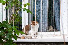 DSC_4009.jpg (Kaminscy) Tags: saskakepa window warsaw windowsill cat blockofflats pragapołudnie europe poland masovianvoivodeship