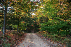 Sun Setting on the Two-Track (Robert F. Carter) Tags: alanson michigan autumncolor autumncolors dirtroad dirtroads fall fallcolor fallcolors ginoproad october autumn orange ngc crookedtreephotographicsociety