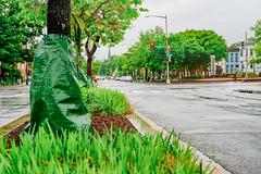 2019.05.04 Vermont Avenue Garden Blooms and Work Party, Washington, DC USA 01971