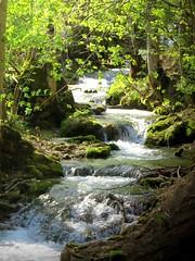 creek (mknt367 (Panda)) Tags: outside nature creek forest trees sunshine rapids waterfalls green