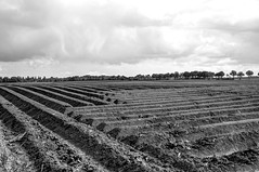 Haakse lijnen (Frank Berbers) Tags: landschap landscape landschaft limburgslandschap limburg zuidlimburg haakselijnen quadratischelinien lignescarrées lines squarelines linien lijnen zwartwit schwarzweis blackandwhite noiretblanc