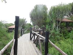 Serengeti Visitors Center - Elevated Pathway (jcharphotos) Tags: tanzania serengeti