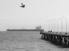 Muelle (Eugercios) Tags: chile valparaiso valpo caleta portales pelicano pelican ship barco pacifico pacific ocean oceano sea mar dock pier muelle southamerica sudamerica america iberoamerica latinamerica latinoamerica hispanoamerica blanco black branco white negro preto bnw bn bw