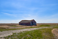 Another abandoned barn (darletts56) Tags: sky blue cloud clouds field fields farm prairie grass driveway green brown wood barn neglect neglected farmers farms saskatchewan canada grasses gravel flat spring red white dirt gold golden abandon decay decaying old