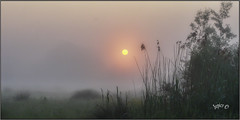 Soft Sun.. (Picture post.) Tags: landscape nature green mist sunrise reeds willow paysage arbre trees brume springtime