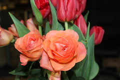 Colours (Davydutchy) Tags: roas roos rose vstal tulp tulip tulipán bloem blume flower fleur květina bouquet straus boeket kytice april 2019