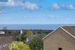 MYates_Photography-5-2 (MYates_Photography) Tags: nikon d5300 sigma 105mm f18 macro porlock somerset dog dogs german spitz pomeranian sleepy walk blue sky
