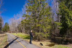 Springtime is here! Sunny and warm morning at the Ottawa river trail with Bully. (lezumbalaberenjena) Tags: spring primavera ottawa river trail dog perro chien boston terrier bully
