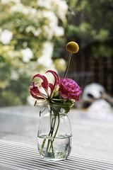 flower monday [Explore] (acabrinkman) Tags: ricohimaging flowermonday pentax pentaxk1mkii pentaxm85 manualfocus legacy lenses kmount 3d flowers explore flowery vase instax dxo 85mm