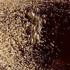 Happy Macro Monday!  Ginger Ale bubbles (benlarhome) Tags: macro macromondays fourelements macromonday