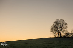 Evening Walk IV (judithrouge) Tags: sundown evening eveninglight sky clearsky trees hill gradient simple minimal walk bavaria silhoutte meadow sonnenuntergang abend abendlicht abenddämmerung abendstimmung himmel farbverlauf bäume hügel spaziergang