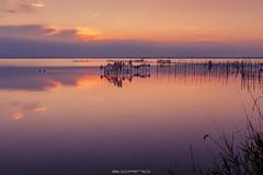 Otro día más (E.Cano) Tags: ngc dawn sunset sun clouds cloudscape sky skyscape sea seascape lake nets albufera valencia spain landscape warm