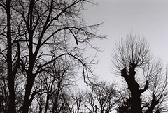 Capillaries (Elios.k) Tags: horizontal outdoors nopeople silhouette trees branches bare leaves trunk tree forest abstract contrast light sky blackandwhite mono monochrome bw travel travelling february 2018 vacation canon camera photography ioannina epirus greece ιωάννινα ελλάδα ήπειροσ europe dark film analoguephotography scannedfilm analogfilm grain canona1 a1 analogcamera kodaktrix trix400
