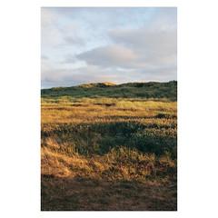 200000875-11 (csinnbeck) Tags: analog film contax rx 50mm 5014 c200 denmark fujicolor 2018 planar summer august dunes northsea evening