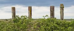 Four Sticks (stevedewey2000) Tags: salisburyplain wiltshire spta sptacentre sony70400g sonya99 post sleepers 2351 widescreen structures posts