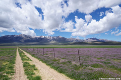 Vanishing Point (walkerross42) Tags: scipio utah field road flowers wildflowers landscape mountains clouds rural dirtroad lane country fence point vanishingpoint