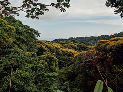 IMG_4454 (tbd513) Tags: spring2019 costarica vacation bachelorparty