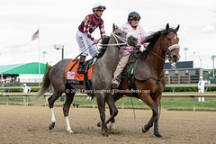 Jaywalk (Casey Lynn Photos) Tags: 2019 2019copyright horse horseracing racehorse horserace horses elpotroroberto canon canonphotography canonusa canonlens canonphoto canonphotos canoncamera mirrorless churchilldowns louisville kentucky kentuckyderby kentuckyoaks