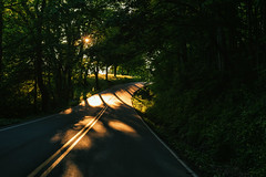 Whats around the bend? (Sarah Rausch) Tags: 50mm sony sunset 56 sunburst shadow trees road