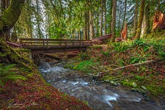 The Bridge Over July Creek (rebeccalatsonphotography) Tags: photomatix hdr creek water bridge rainforest green silkywater slowshutterspeed quinaultrainforest julycreek olympic np nationalpark rebeccalatsonphotography canon trees 5ds 1635mm wideangle