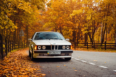 BMW E24 (Andrey Baydak) Tags: bmw 6series 6er coupe e24 classic 1980s 1988 shark sharknose 635 635csi m30b35 inlinesix autumn осінь осень herbst fall leaves orange forest лес ліс backroad perspective automotive 2470
