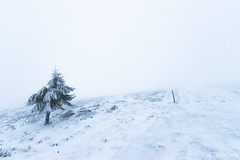 Nature blanche (Quentin Douchet) Tags: flore nature parcnaturelrégional parcnaturelrégionaldupilat pilat arbre flora landscape neige paysage snow tree