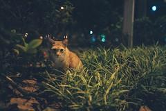 2019新加坡跨年趣,貓的視界 (Eternal-Ray) Tags: 貓的視界 新加坡 leica m10 & 七工匠 7artisans 28mm f14 asph